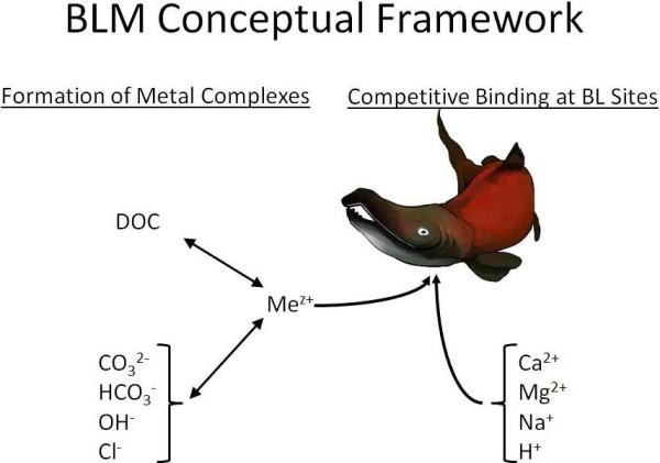 BLM Conceptual Framework