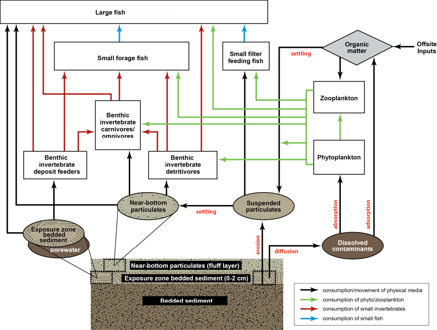 Environmental Models